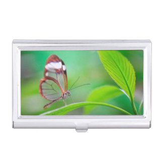 Glass wing butterfly relaxing on fresh green business card holder