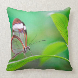 Glass wing butterfly relaxing on fresh green cushion