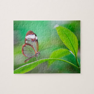 Glass wing butterfly relaxing on fresh green jigsaw puzzle