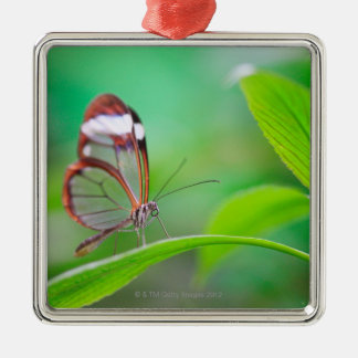 Glass wing butterfly relaxing on fresh green Silver-Colored square decoration