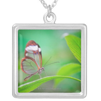 Glass wing butterfly relaxing on fresh green silver plated necklace