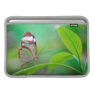 Glass wing butterfly relaxing on fresh green sleeve for MacBook air