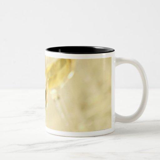 Glasses of white wine for wine tasting, close up mug