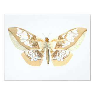 GlassWing Butterfly 11 Cm X 14 Cm Invitation Card