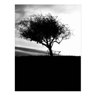 Glastonbury Hawthorn. Tree. Black and White. Postcard
