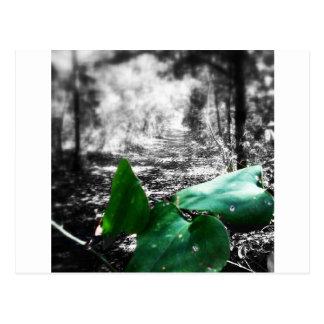 Gleen Leaf Trail Postcard
