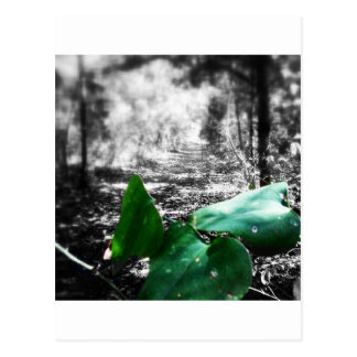 Gleen Leaf Trail Postcard