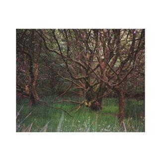 Glendalough Woods Canvas