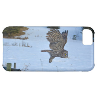 Gliding Great Grey Owl and Snow Wildlife Raptor iPhone 5C Case