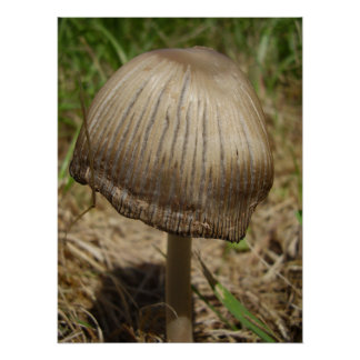 Glistening Inkcap Mushroom Poster