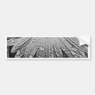Glistening Rain Drops on Daisy Flower Bumper Sticker