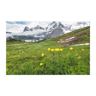 Globe Flowers, Almendhube, Switzerland - Canvas Canvas Print