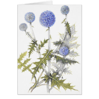 Globe Thistle Collection Card