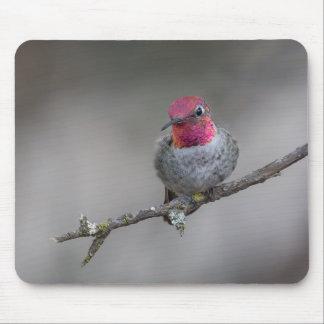 Gloomy Anna's Hummingbird Mouse Pad