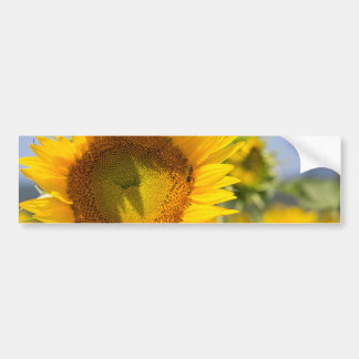 Glorious sunflowers! bumper sticker