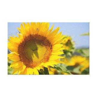 Glorious sunflowers! canvas print