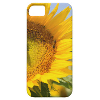 Glorious sunflowers! iPhone 5 covers