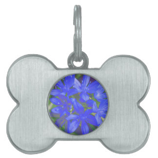 Glory of the Snow Fluorescent Blue Pet Tag