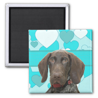 Glossy Grizzly in Blue Kitchen & Dining Fridge Magnets