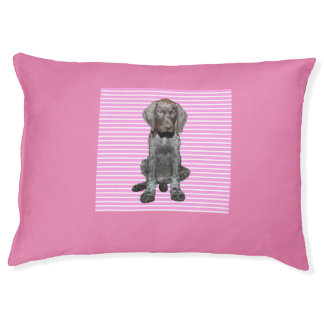 Glossy Grizzly in Pink Pet Bed