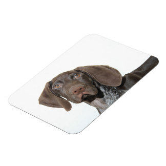 Glossy Grizzly Rectangular Photo Magnet