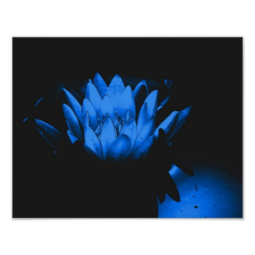 Glowing Blue Water Lily Lotus Flower Poster