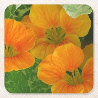Glowing Orange Nasturtium Party Coaster Square Paper Coaster