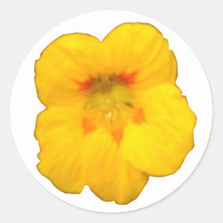 Glowing Yellow Nasturtium Flower Sticker