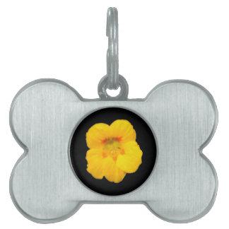 Glowing Yellow Nasturtium Pet Tag