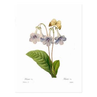 Gloxinia Postcard