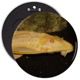 Glyptoperichthys gibbiceps 6 cm round badge
