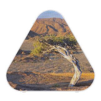Gnarled Tree And Desert Lands, Richtersveld