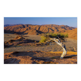 Gnarled Tree And Desert Lands, Richtersveld Poster