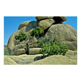 Gnarled Tree, Bushes Among Boulders Print
