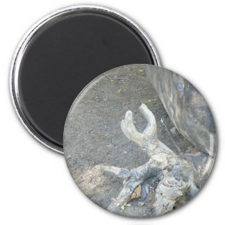 Gnarly 6 Cm Round Magnet