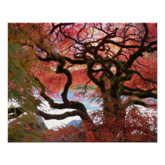 Gnarly Japanese Maple Floral Poster