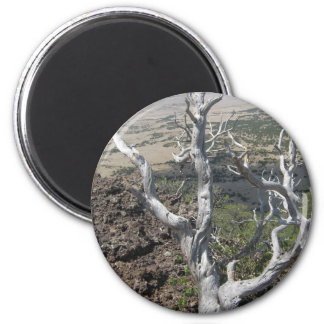 Gnarly Tree 6 Cm Round Magnet