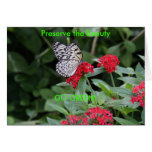 GO GREEN!  Butterfly Beauty Greeting Cards