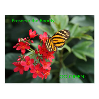 GO GREEN! Butterfly Colors of Spring Postcard