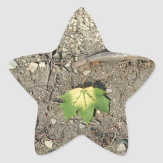 Go Green Reduce Reuse Recycle Star Sticker