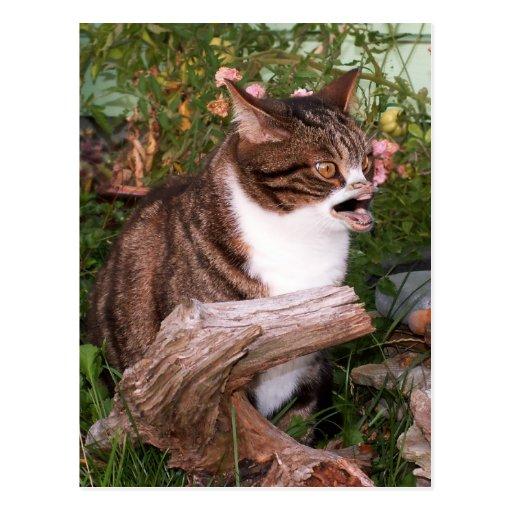 Goacat postcard