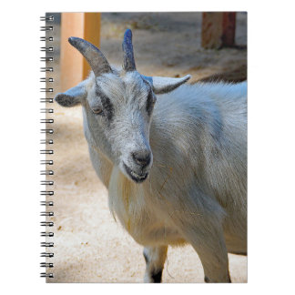Goat 540 notebooks