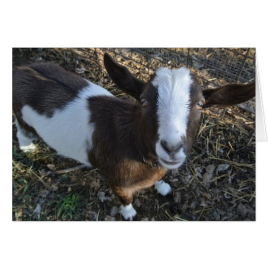 Goat Barnyard Farm Animal Card