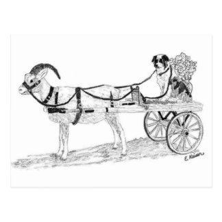 Goat Cart with Shepherd Dog and Flowers Postcard
