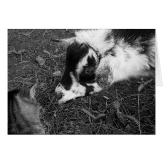 Goat Cautiously Approaches Cat Note Card