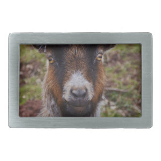 Goat close up. belt buckles