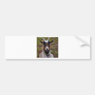 Goat close up. bumper sticker