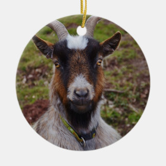 Goat close up. christmas ornament