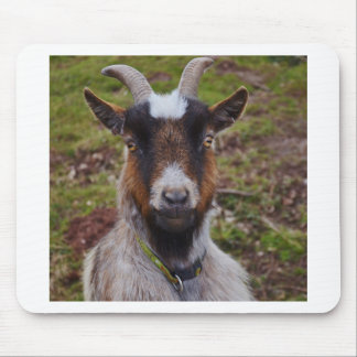 Goat close up. mouse pad