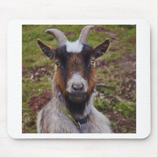 Goat close up. mouse mats